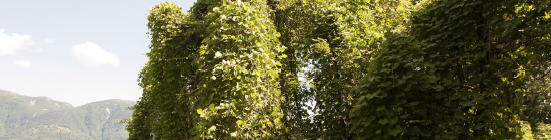 pianteesoticheinvasiveconoscerleericonoscerle